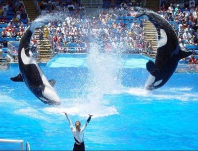 ORCAS (2)