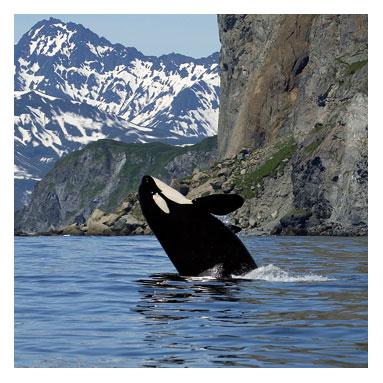 ORCAS (3)